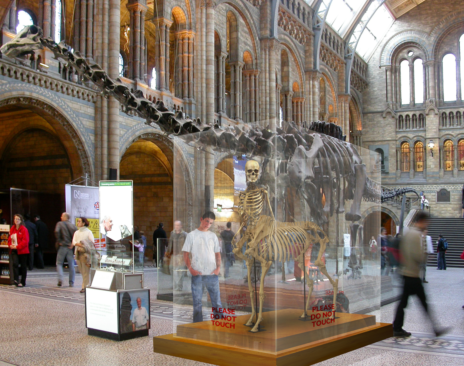 Centaur skeleton at The Natural History Museum, London
