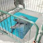 Dolphin pool