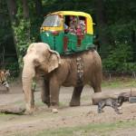 Rickshaw Howdah