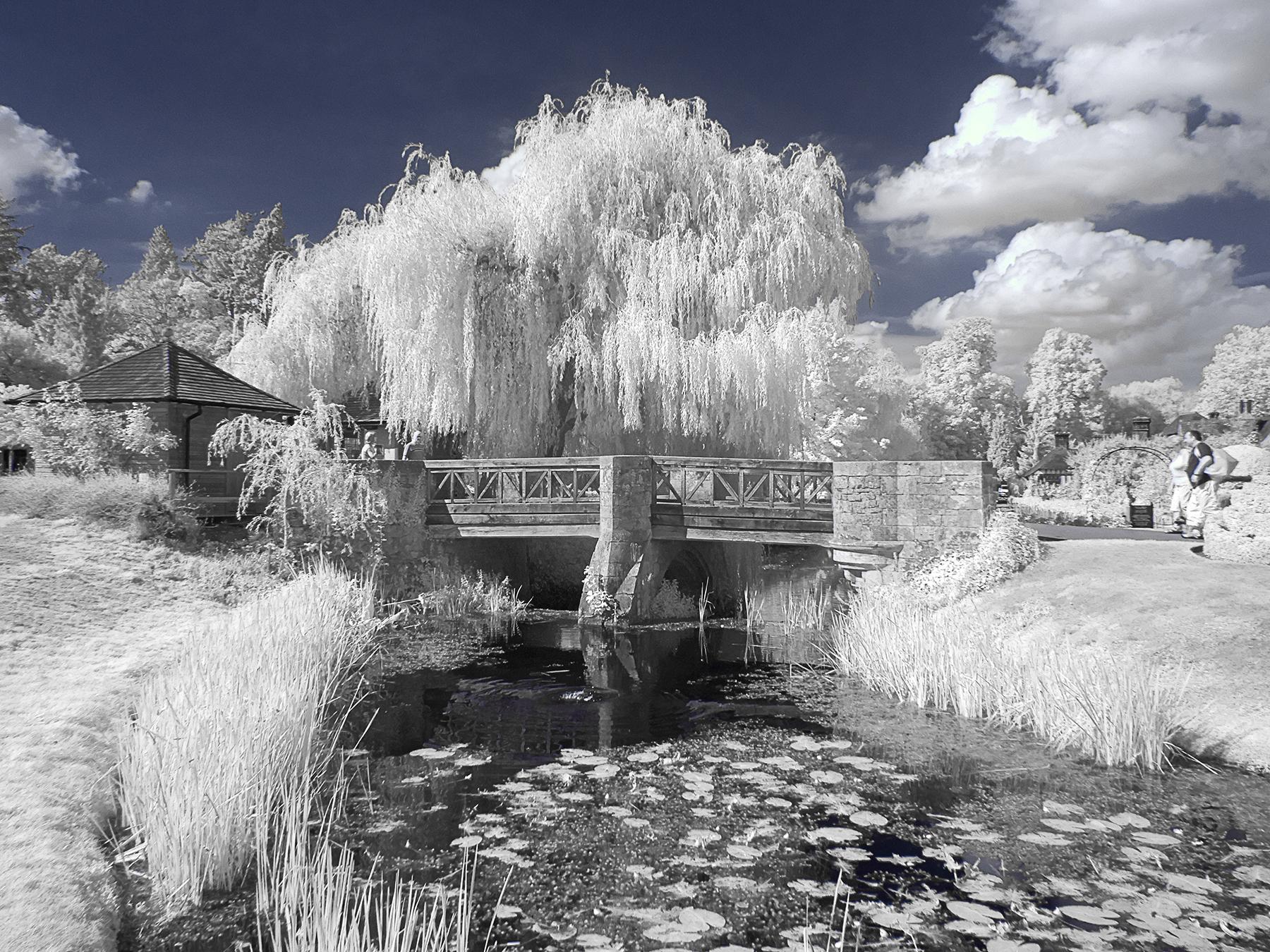 Bridge and Willow tree1661
