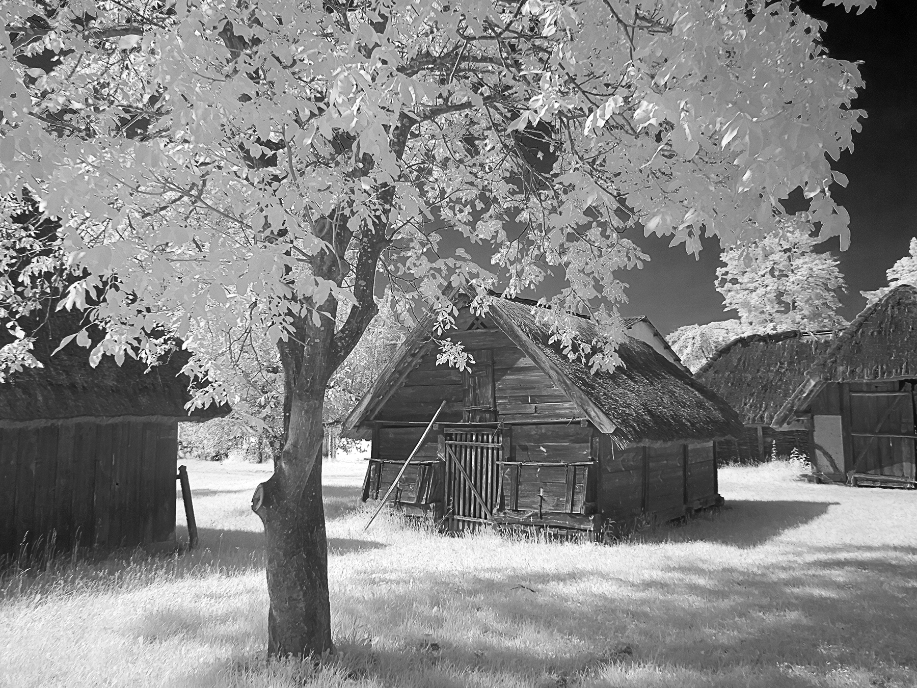 Hungary Old Wood House 2615