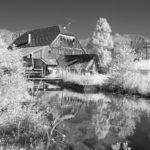 mill-graswang-5656