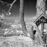 shrine-3553